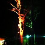 Objektbeleuchtung Baum gelb