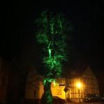 Objektbeleuchtung Baum grün